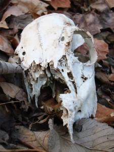 Bones in the Woods