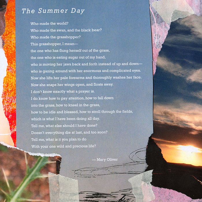 the-summer-day